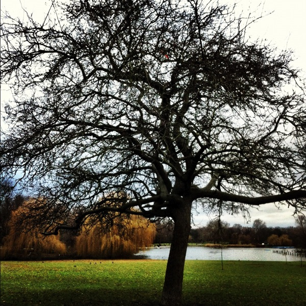 Regent's Park, photo taken by Shahid K. Ahmad